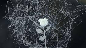 Flower Ia
